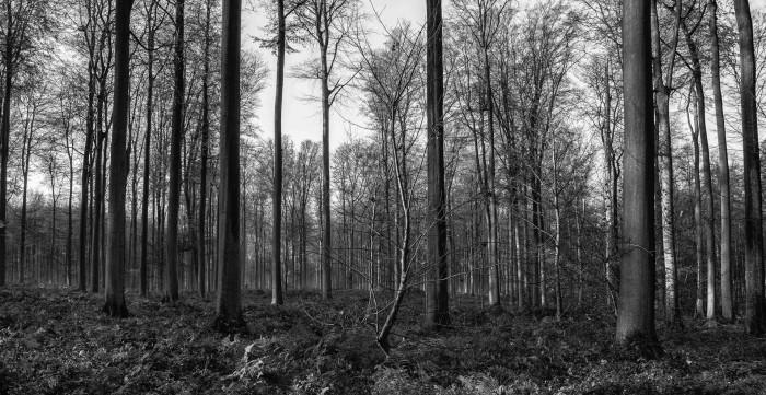 arboritech-08