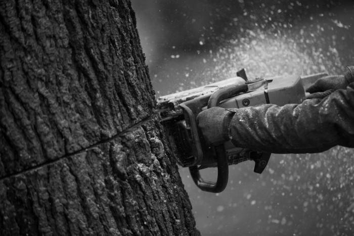 abattage-arboritech-05