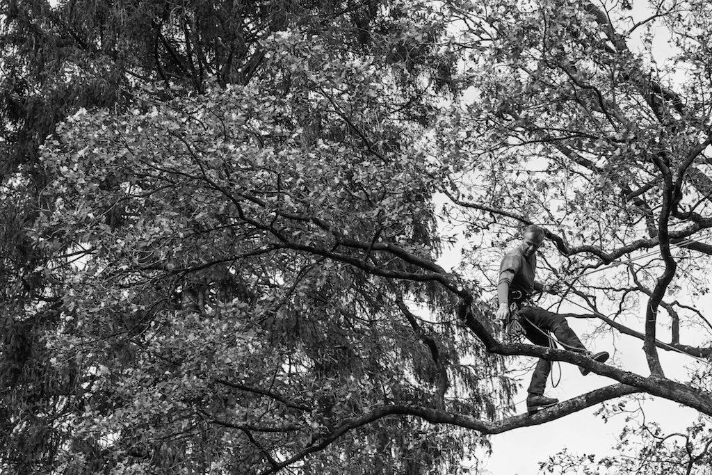 François Dussenne, élagueur grimpeur et gardien des arbres